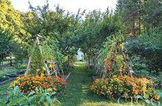 house flower garden 471259548501794838 - In documentary filmmaker Pamela Page and husband Igor Jozsa, an architect… Source by Potager Garden, Veg Garden, Edible Garden, Garden Beds, Garden Landscaping, Vegetable Gardening, Biodynamic Gardening, Landscaping Borders, Permaculture Garden