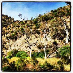 Werribee Gorge, Victoria, Australia