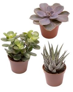 Mehikasvi mix Planter Pots