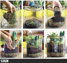 Dekorative Glasbepflanzung
