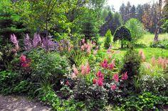 Puunystävän puutarha - A Tree-lovers Garden Text Anna Aho, photos Ritva Tuomi www.viherpiha.fi