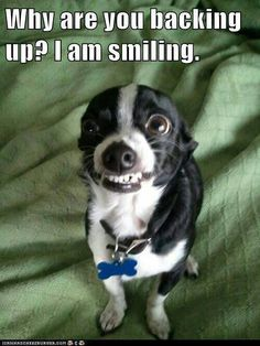 smiling dog- Guthrie... haha