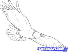 how to draw eagles | how-to-draw-an-eagle.jpg