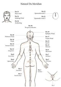 Natural Du Meridian - ECAN International school of acupuncture - Learn…