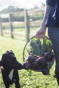 Beets pulled from my mom's huge garden. We needed to raise enough food for nine people to can and last us through the long cold winters. J. Poppen