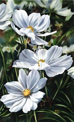 White Cosmos 1