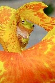 Online Contest - Your Best Animal Action Shot - Fine Art America Beautiful Creatures, Animals Beautiful, Cute Animals, Sapo Meme, Animal Action, Cute Frogs, Frog And Toad, Tier Fotos, Mundo Animal