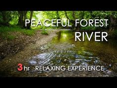 Relaxing River Sounds - Peaceful Forest River - 3 Hours Long - HD 1080p - Nature Video - YouTube