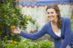 """Learn about growing and caring for a Kaffir Lime Tree on Season with Spice from Chloe Thomson of the """"Garden Gurus"""" TV show in Australia"""