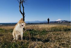 Animal Photographer Mitsuaki Iwago Discusses 'How to Photograph Cats'