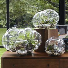 Wire Terrarium hand blown glass and metal @ West Elm