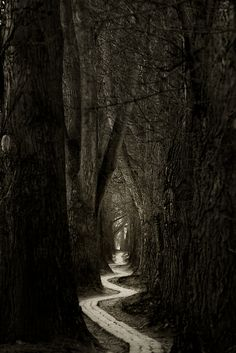Druids Trees:  A path through dark #woods.