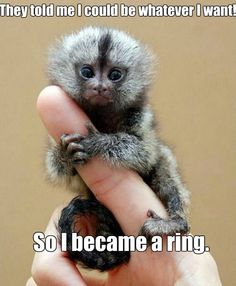 MEME - Monkey Ring - www.funny-pictures-blog.com
