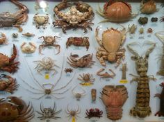 Scientific arrangement of different species of crustacean. I saw these at a store in New York City.