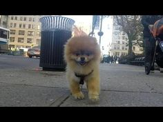 10 Hours of Walking in NYC as a Dog