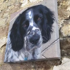 Pets on canvas  Great gift ideas