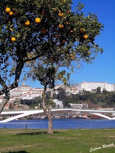 Inverno Parque Verde - Coimbra - Portugal