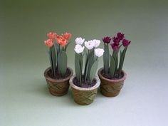 Hey, I found this really awesome Etsy listing at https://www.etsy.com/listing/164187935/parrot-tulips-paper-flower-kit-for-112th