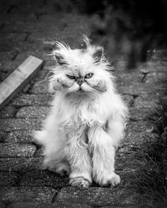 fb82b49e25 Scruffy cat by Per Kaer on 500px Funny Animal Pictures