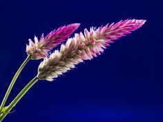 Download this free photo here www.picmelon.com #freestockphoto #freephoto #freebie /// Purple Plants | picmelon
