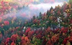 Δάσος Ελατιάς (Δράμα, Ελλάδα) - Κριτικές - TripAdvisor