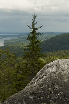 View over Pielinen from Ukko-Koli, Koli National Park