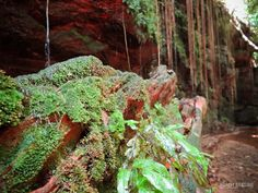 O Cânion Sussuapara é uma pequena fenda de aproximadamente 25 m de profundidade. Paredões de rocha impedem que o sol chegue até o solo. É praticamente um santuário de 'frescor' diante do calor do Tocantins. A vegetação em volta do cânion é adaptada a climas úmidos e pouca luminosidade. As raízes penduradas nos paredões divide espaço com as samambaias nativas que parecem terem sido cuidadosamente colocadas ali.  Texto e fotografia: Cris Marques.