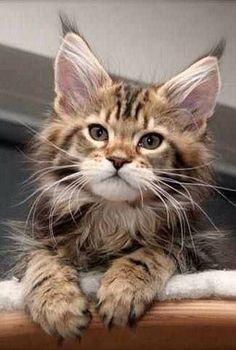http://www.freekibble.com/amazing-cats-12/