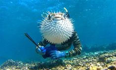 Perfect Fish Photobomb