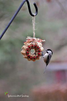 Rebecca's Bird Gardens Blog: DIY Miniature Suet and Birdseed Wreaths