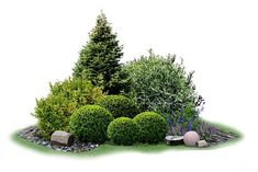 would make a useful island planting in our side yard by the fence. would make a useful island planting in our side yard by the fence.would make a useful island planting in our side yard by the fence. Evergreen Landscape, Evergreen Garden, European Garden, Garden Landscape Design, Easy Garden, Front Yard Landscaping, Landscaping Ideas, Plant Decor, Garden Planning