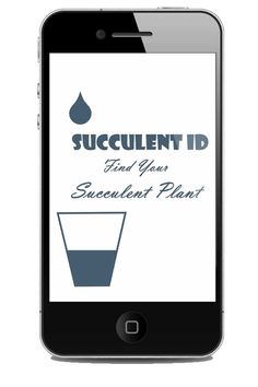 The correct Succulent Plant Identification will help you to look after your plants and make them thrive; ask here what on earth your succulents are.
