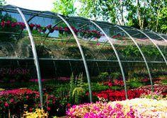 Resultado de imagem para greenhouse