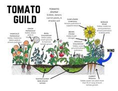 Forest Garden, Veg Garden, Vegetable Garden Design, Edible Garden, Garden Plants, Homestead Gardens, Farm Gardens, Permaculture Design, Permaculture Garden
