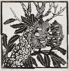 Thank you Margaret Preston for pioneering linocut in Australia. Your Australian flora work is stunning. Banksia and trunk, Circa 1935 Australian Wildflowers, Australian Native Flowers, Australian Artists, Henri De Toulouse Lautrec, Gustav Klimt, Lino Print Artists, Margaret Preston, Art Graphique, Linocut Prints