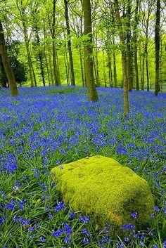 ~Moss & Blue Bells~