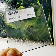 #gavaplast #vzorkaskla #chinchilacira #sklo #vchodovedvere #sklonadverach #glass #sample #home #windowglass Cards Against Humanity, Chinchilla