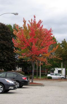 Our foliage peeked early this year.  I shot this one down in Bennington, Vermont.  October 1, 2012