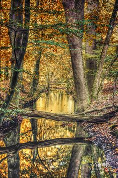 Wandeling door het Leuvenumse Bos