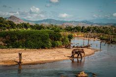 Uda Walawe National Park safari tour