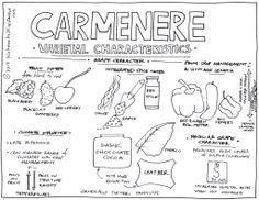 Carménère Characteristics: The Chilean Master Class | Hawk Wakawaka Wine Reviews - October 24, 2013
