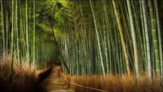 Segano Bamboo Forest is located in Japan and it's one of the most beautiful bamboo forests in the world.