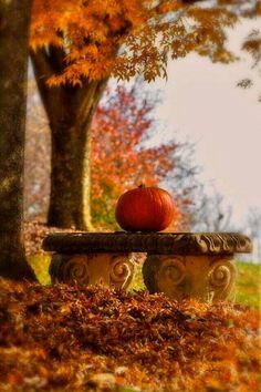 Pumpkin on a bench
