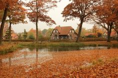 Nature in Griendtsveen, Netherlands (such charming little village south autumn) - a photo by elly holland