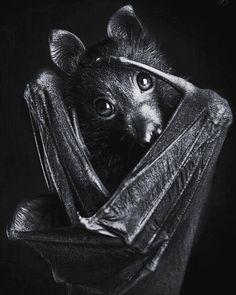 #bat #photography #nature