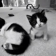 #Cats #Cat #Kittens #Kitten #Kitty #Pets #Pet #Meow #Moe #CuteCats #CuteCat #CuteKittens #CuteKitten #MeowMoe Hi there ... https://www.meowmoe.com/28719/