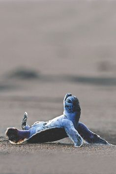 """Never Give Up. After the first wave, the little Turtle overturned"" by Martin Demmel"
