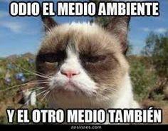 gato gruñon meme español - Buscar con Google