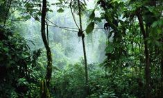 The Amazon Rainforest, Ecuador