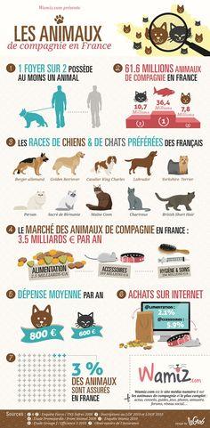 Infographie très intéressante sur le marché des animaux de compagnie en France - Par Wamiz